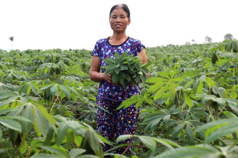 Hình ảnh Bà Quy bên đồi rau sắn trồng lấy ngọn làm rau và lấy lá nuôi tằm