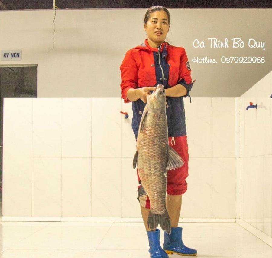 Cá Trắm Đen trên 8kg là loại cá được sử dụng để làm Cá Thính Muối chua của cơ sở Cá Thính Bà Quy